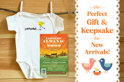 just hatched baby onsie gift set